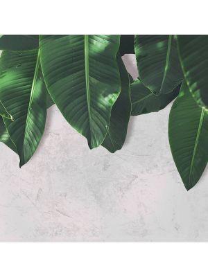 1-DD118546 Leaves Wall 2 Fototapeta flis 350×255 cm