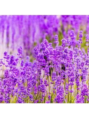 A35901 Lavendel Flis Fototapeta Tapetedekor