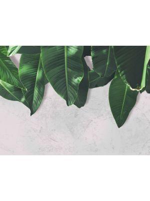 1-DD118546 Leaves Wall 2 Fototapeta flis 350×255 cm
