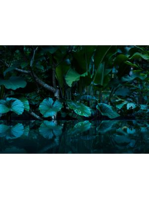 11-DD118796 Tropical Fototapeta flis 350×255 cm