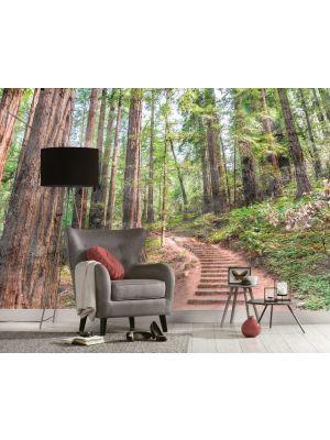 35-DD118626 Forest Fototapeta flis 350×255 cm