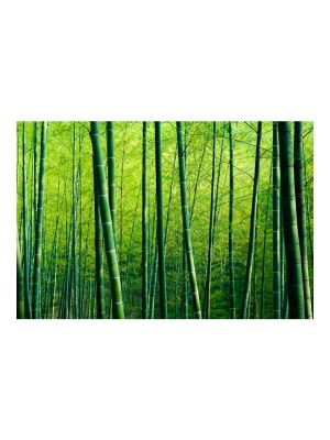 F-1149 Bamboo forest