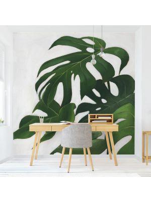 F-1162 Plants - Monstera