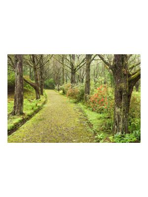 F-1078 Forest path